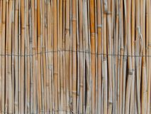 Reeds cane wall texture. Background Royalty Free Stock Image