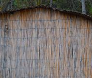 Reeds cane wall texture. As background Royalty Free Stock Image