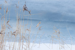 Reeds in Cold Sea. Winter background stock images