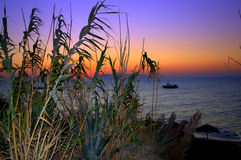 Reeds and colorful sunrise from Santorini Royalty Free Stock Photos