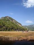 Reeds in Dalyan, Mugla Royalty Free Stock Images