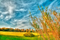 Reeds at dusk Royalty Free Stock Photo