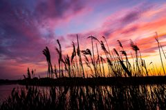 Reeds on evening river Stock Images
