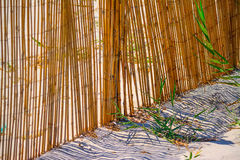 Reeds fence at beach entrance Royalty Free Stock Image