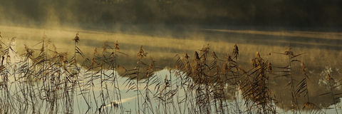 Reeds and fog patches Stock Image