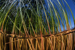 Reeds in Freshwater Lake. Reeds grow along the shallow edge of a freshwater lake in Massachusetts. Aquatic flora grows quickly, creating an underwater jungle Stock Photo