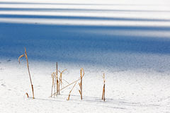 Reeds on a frozen lake Royalty Free Stock Images