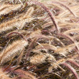 Reeds of grass Royalty Free Stock Images