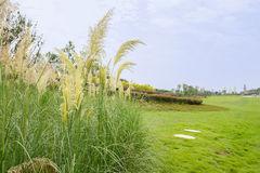 Reeds in grassy lawn on cloudy summer day Royalty Free Stock Photos