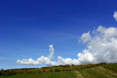 Reeds On A Hillside. Low horizon of reeds in a field, with low level cumulus clouds in a blue sky. Set in the Brecon Beacons, National Park, Wales United Kingom royalty free stock photo