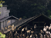 Reeds and houses. Sunny reeds and historic ethnic minorities Stock Image