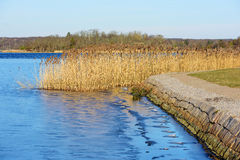 Reeds and ice Royalty Free Stock Photo