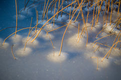 Reeds in iced water Royalty Free Stock Photos