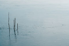 Reeds in icy reservoir Stock Image