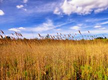 The Reeds inside White Memorial Nature Area Stock Photography