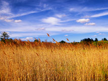 The Reeds inside White Memorial Nature Area Stock Photo