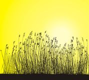 Reeds, Isolated Vector. Reeds On Yellow Background, Isolated Vector Stock Photography