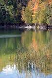 Reeds in Lake Royalty Free Stock Photo