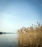 Reeds and the lake Stock Photography