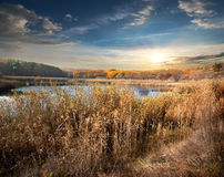 Reeds and lake Royalty Free Stock Images