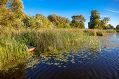 Reeds by a lake with boat Royalty Free Stock Photography