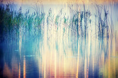 Reeds on lake. Reeds growing in a Lake with an abstract pattern of rainbow colors on the water surface interrupted by shadow of reeds royalty free stock images