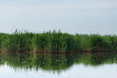 Reeds and lake Stock Photography