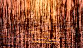 Reeds Royalty Free Stock Photos