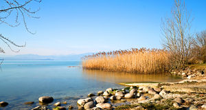Reeds on lake. Reeds and the lake are peaceful Stock Photo