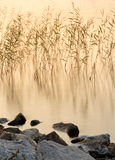 Reeds in lake at sunset Stock Photography