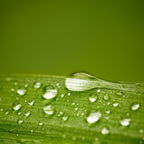 Reeds leaf with water drops. With space for text. Stock Photo