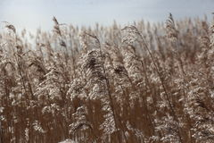 Reeds in the Long Grass Stock Photos