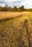 Reeds meadow with shadow of photographer stock photo