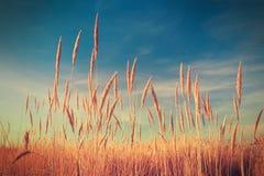 Reeds over blue sky Royalty Free Stock Photos