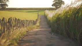 Reeds path on the farm stock video footage