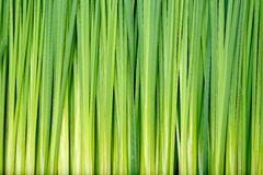 Reeds pattern Royalty Free Stock Photos