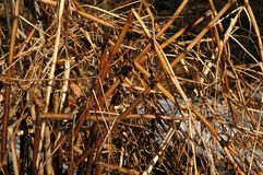 Reeds by the River. Closeup of Reeds by a River stock photo