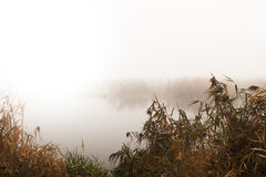 Reeds by the river on a foggy day Royalty Free Stock Photography