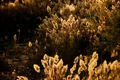 Reeds and rock Royalty Free Stock Photos