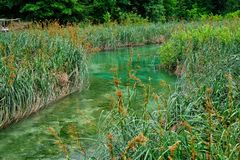Reeds and Rushes Growing in Plitvice Lakes, Croatia Royalty Free Stock Photography