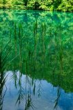 Water Weed Reflections in Clean Turquoise Water, Plitvice Lakes, Croatia Stock Images