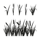 Reeds set. Design elements  on white Royalty Free Stock Image