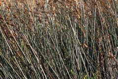 Reeds on Shore Stock Photos