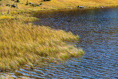 Reeds on the shore of a lake Stock Images
