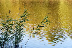 Reeds silhouette Stock Image