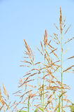Reeds in summer Stock Images