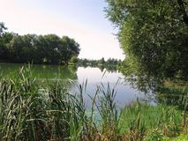 Reeds in the sun by a river flowing near a beautiful green forest zone. For your design Stock Image