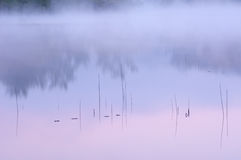 Reeds and Sunrise Reflections Royalty Free Stock Image
