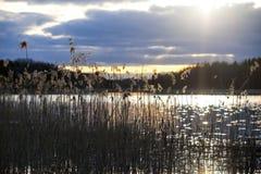Reeds at sunset Stock Photo