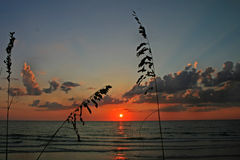 Reeds at Sunset Royalty Free Stock Image